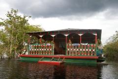 Amazonia (10)