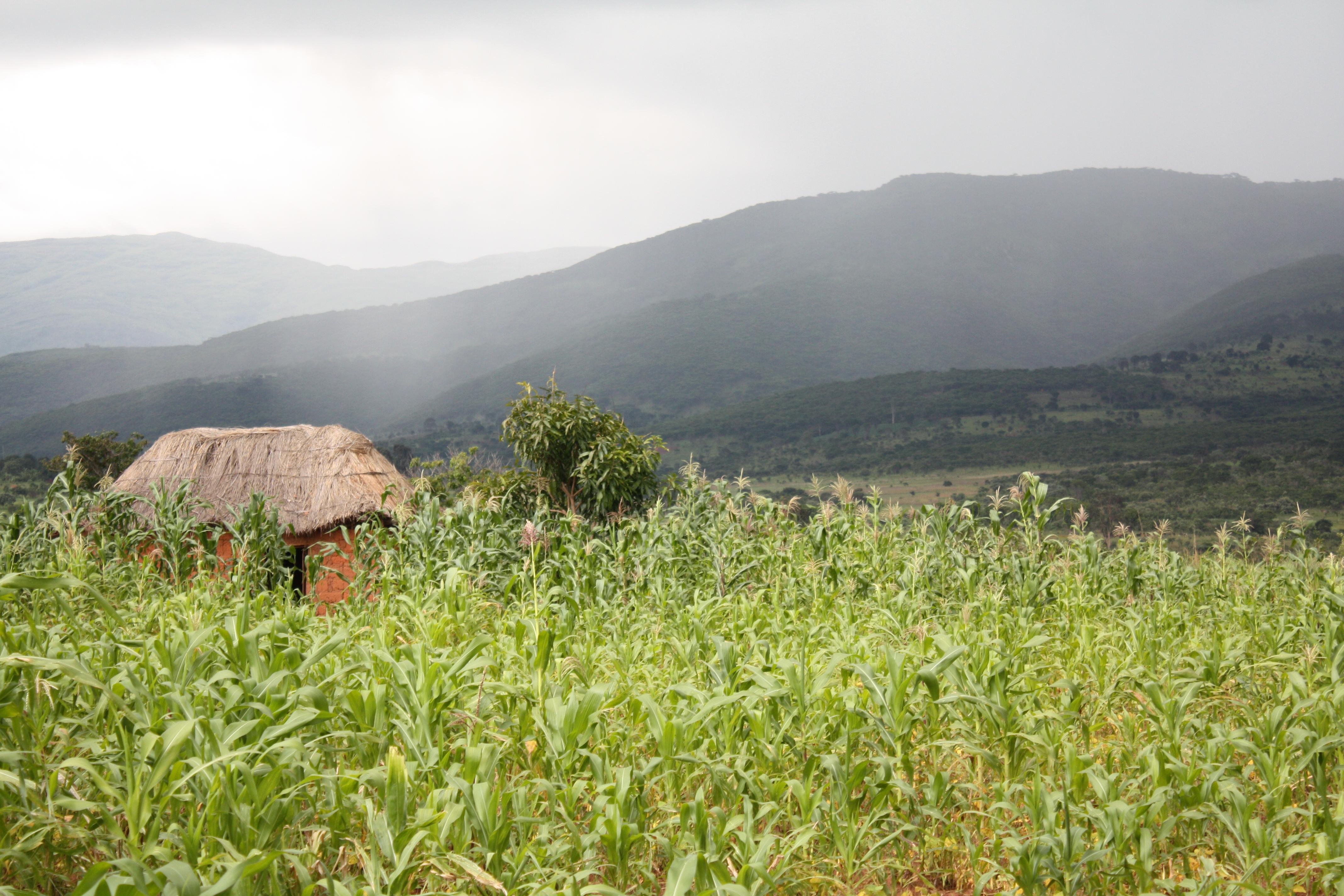 Angola (3)